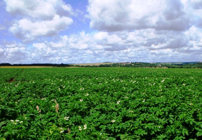 Potatoes in the Somme grassrootsgroundswell https://flic.kr/p/eGxqmq (CC BY 2.0)